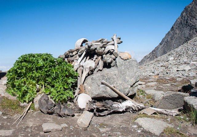 Misteriosos esqueletos del Himalaya revelan ADN mediterráneo antiguo