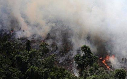 Brasil.- Los incendios forestales se disparan un 83 por ciento en Brasil
