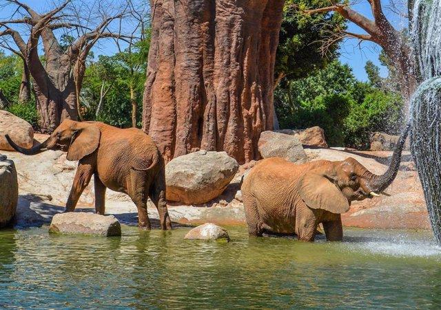 Lago de elefantes de Bioparc Valencia