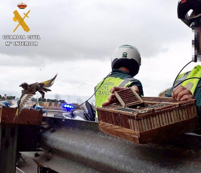 La Guardia Civil realiza una suelta de jilgueros