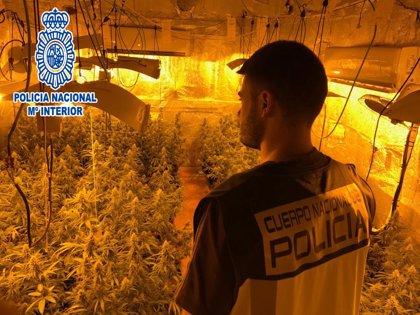 Detenido por un cultivo de marihuana de 200.000 euros en Masquefa (Barcelona)