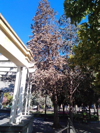 El Ayuntamiento retirará dos árboles muertos de grandes dimensiones en el parque del Carmen y en el Paseo de El Espolón