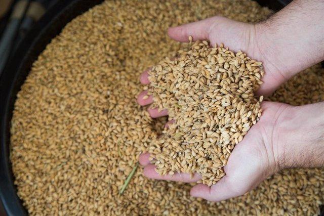 El sector agroalimentario es uno de los componentes fundamentales en la balanza comercial de Andalucía.