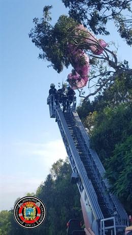 Rescate del parapentista atrapado en un árbol junto a la playa de Mataleñas