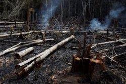 Bolsonaro diu que les ONGs podrien estar provocant els incendis a l'Amazones (REUTERS / BRUNO KELLY)