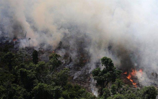 Incendios.- Fridays For Future se manifestará mañana ante Embajadas de Brasil de