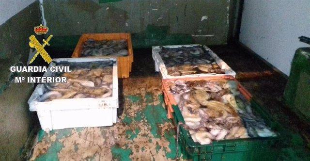 Intervenidos 122 kilos de pulpo en el puerto de Fisterra (A Coruña) por carecer de permiso de descarga.