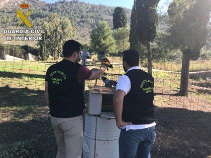 Detenido un hombre por robar 39 palomos valorados en 30.000 euros en el Puig