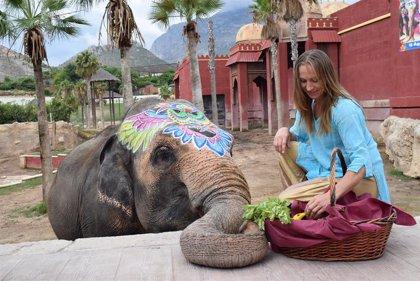 La elefanta Petita celebrará su 47 cumpleaños con una gran batalla de agua y colores en Terra Natura
