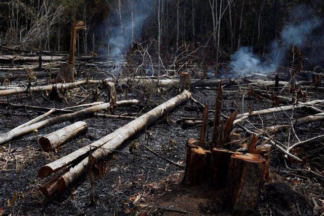 Incendios.- Greenpeace y WWF lamentan la impunidad frente al fuego en el Amazona