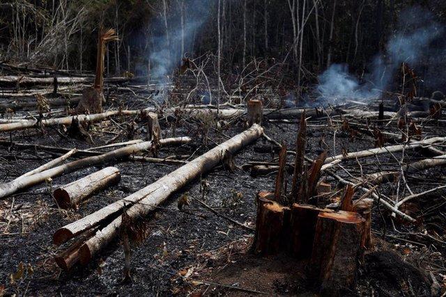 Una parte del gran incendio del Amazonas