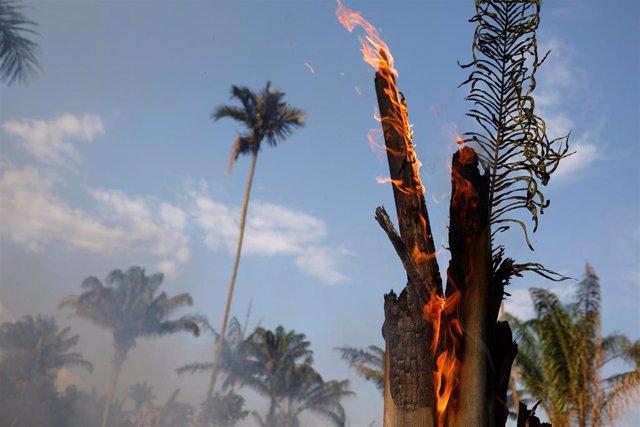 Varios árboles quemándose por el fuerte incendio en la jungla del Amazonas