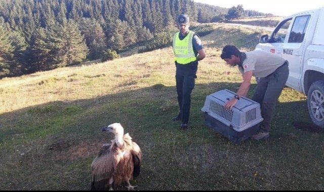 Imagen del rescate del buitre.