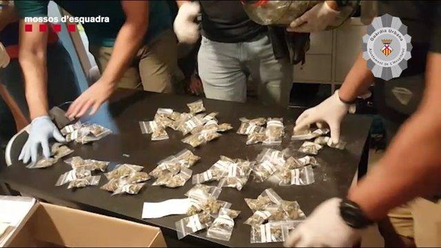 Mossos d'Esquadra y la Policía Local de L'Hospitalet de Llobregat (Barcelona) incautan droga en el barrio de Les Planes - Florida.