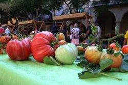 La I Fira de la Tomaca del Priorat exposa una quarantena de varietats d'aquesta hortalissa a Falset (ACN)