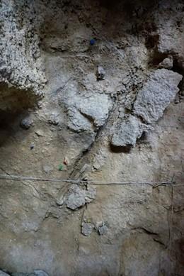 Petjada d'un de les restes de fusta localitzats en l'Abric Romaní de Capellades