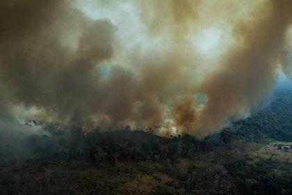 Brasil.- Bruselas abre la puerta a dar ayuda financiera a Bolsonaro para combatir los incendios del Amazonas