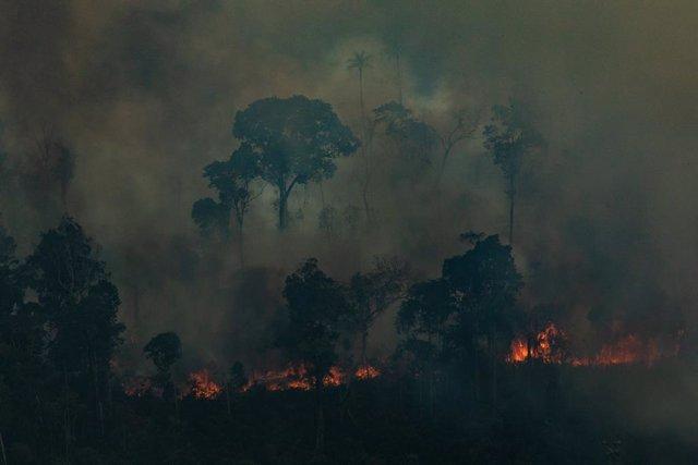 Focs en la selva de l'Amazones
