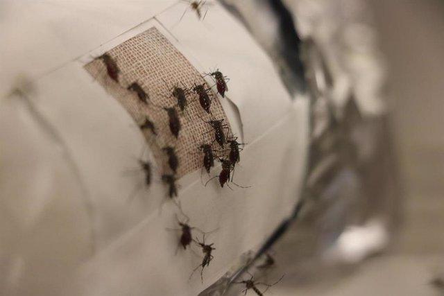 Un nuevo estudio sugiere que las películas de grafeno pueden evitar que los mosquitos piquen.