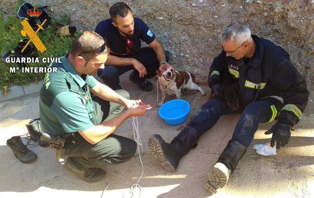 Auxilio de dos perros atrapados en una arqueta en Alhabia (Almería)