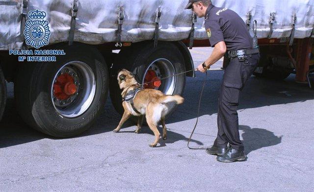 Perros de la unidad canina de la Policía inspeccionan un camión en busca de menores extranjeros no acompañados