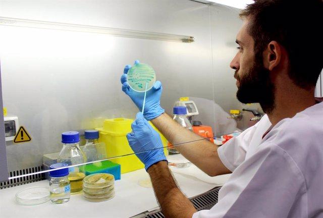 Investigadores españoles descubren nuevos compuestos naturales para combatir la