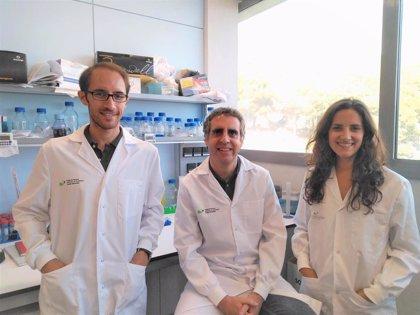 Esteller descubre un factor que predice una supervivencia larga en pacientes con tumor cerebral