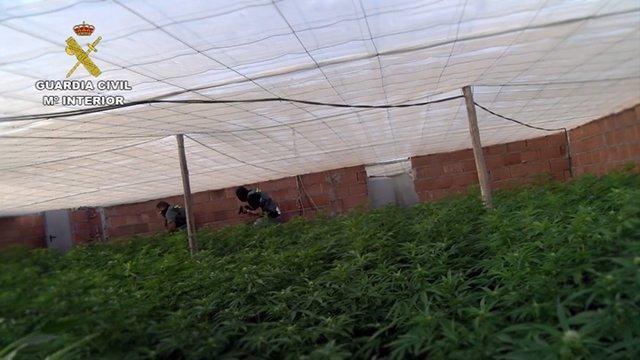 Desarrollo de la operación 'Pozo Green' contra el cultivo de marihuana