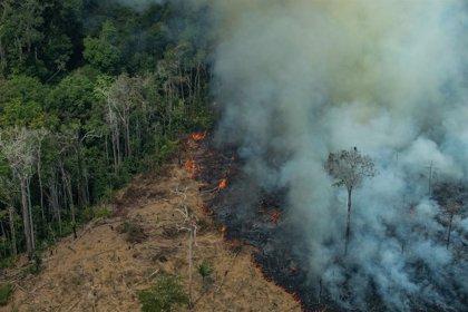 Brasil.- Bolsonaro prohíbe durante 60 días las quemas en todo Brasil para combatir los incendios en la Amazonia