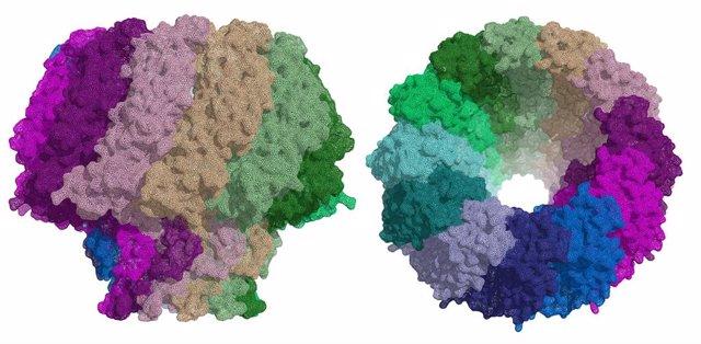 Investigadores esapñoles describen una proteína esencial para la infección por e