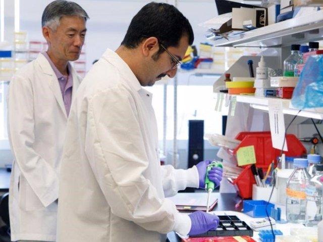 Encuentran una molécula que aumenta la grasa corporal aunque se coman productos