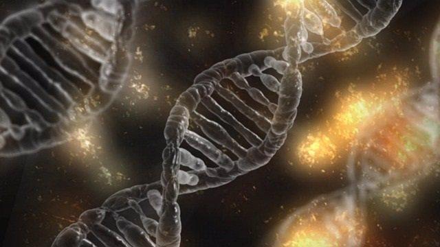 Adn, genética, genes
