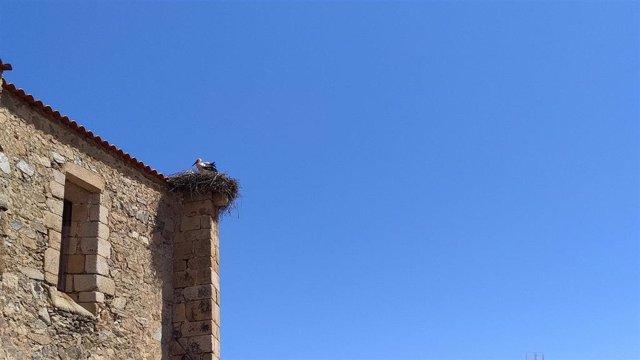 Una cigüeña en su nido en una iglesia un día con cielos despejados