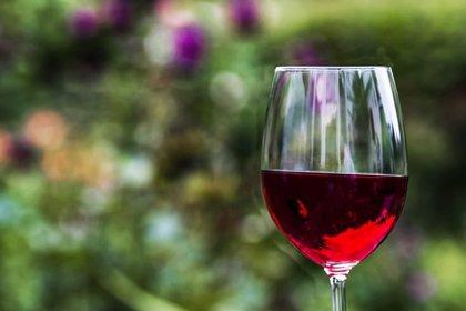El vino tinto y la salud intestinal