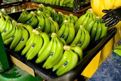 El calentamiento global pone en peligro el cultivo del plátano en los países productores en 2050