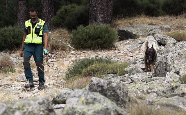 Acompanyat d'un gos de rastreig, un agent de la Guàrdia Civil continua amb els treballs de cerca de l'esquiadora i medallista olímpica, Blanca Fernández Ochoa, desapareguda el passat 26 d'agost.