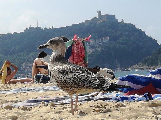Gaviota en la playa de La Concha de San Sebastián.