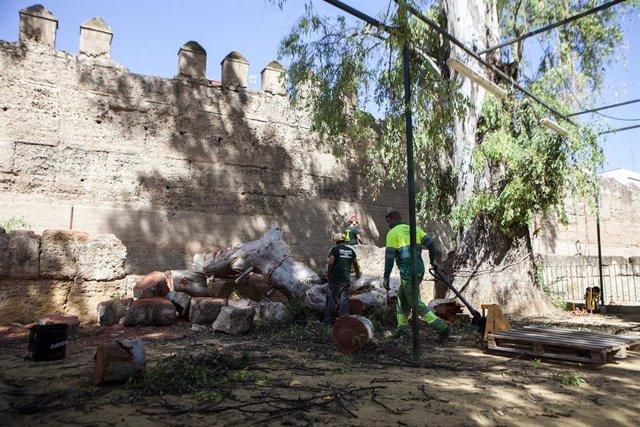 Operarios en los jardines de la muralla de la Macarena