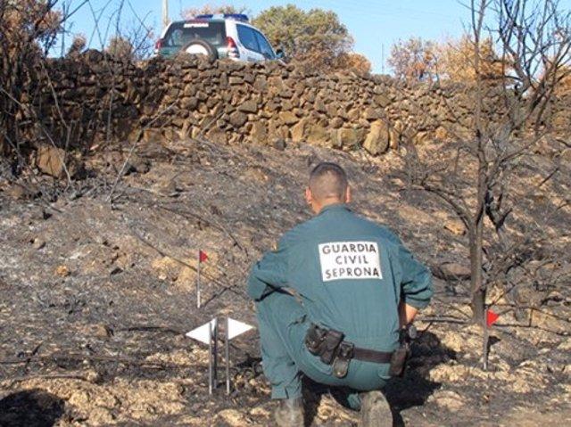 Un agente del Seprona investiga un incendio