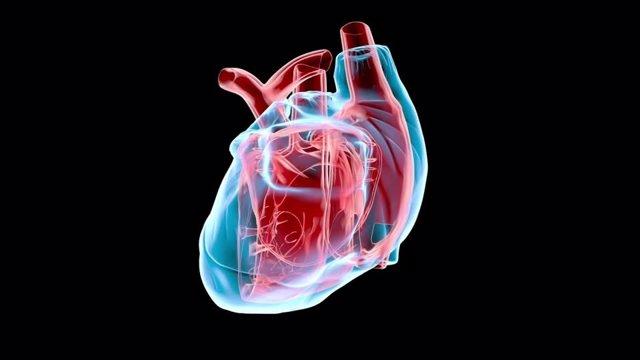 Pequeñas variaciones en los genes pueden aumentar el riesgo de padecer una enfermedad cardíaca.