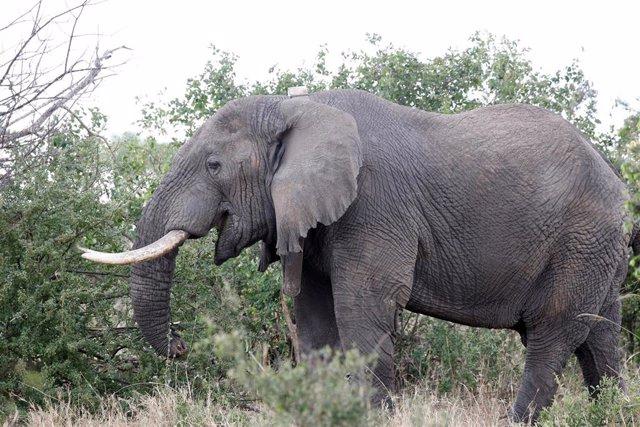 Elefante en una reserva de Tanzania