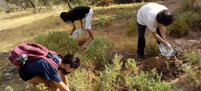 Voluntarios plantando un árbol en Granada