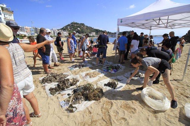 Voluntarios recogen basura en la playa de Sa Palomera de Blanes (Girona).