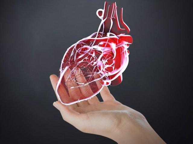 Simulación de corazón en 3D.