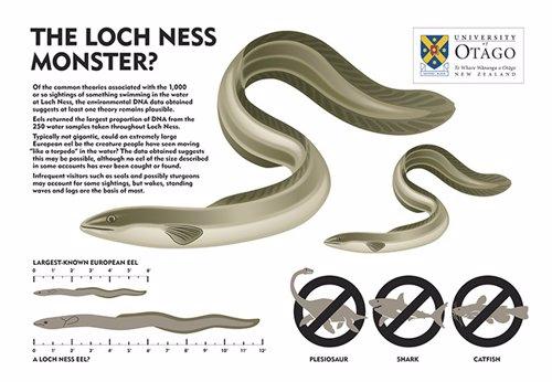 Anguilas gigantes, una explicación para 'Nessie'