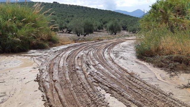Estado del camino de la Dehesa tras las lluvias registradas en Torres.