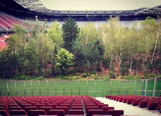 Un bosque dentro de un estadio de fútbol
