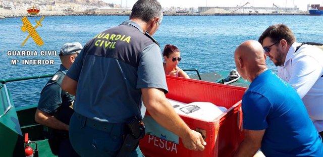 Suelta de tortugas bobas este lunes en Almería