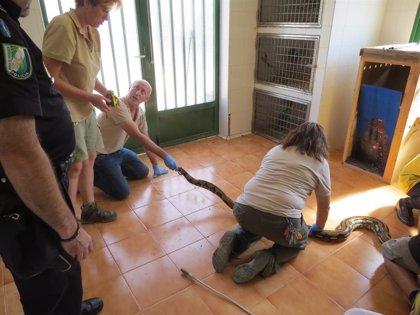 Capturan una serpiente pitón de tres metros hallada junto a la basura en Almería