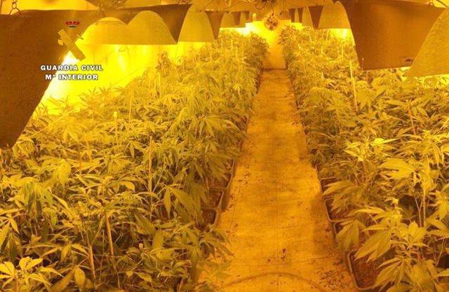 Plantación de marihuna en Riotuerto